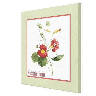 Nasturtium Botanical Art Canvas Print