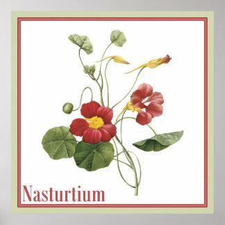 Nasturtium Botanical Square Print