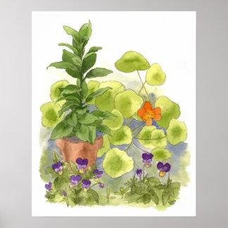 Nasturtium Flower Bay Tree Herbs Watercolor Art Poster