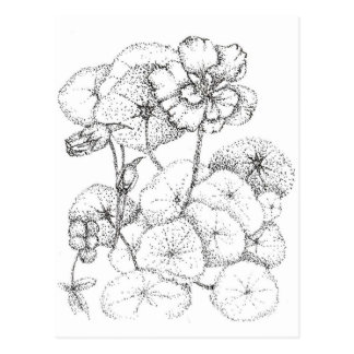 Nasturtium Flower Pen and Ink Drawing Art Postcard