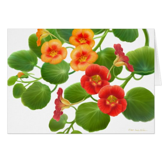 Nasturtium Garden Vines Card
