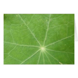 Nasturtium Leaf Greeting Card