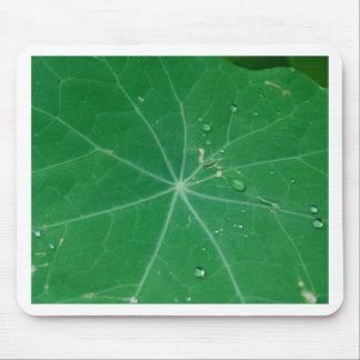 nasturtium leaf mouse pad