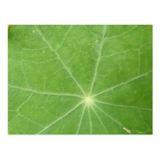 Nasturtium Leaf Postcard
