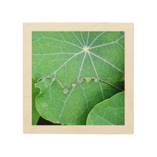 Nasturtium Leaves with Water Drops Wood Square Wood Print