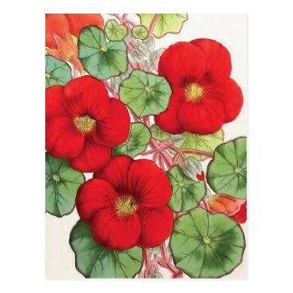 """""""Nasturtium"""" Vintage Flower Illustration Postcard"""