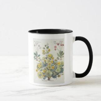 Nasturtiums and Daisies: 1.Nasturtium Indicum; 2.B Mug