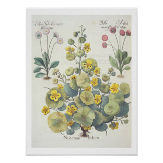 Nasturtiums and Daisies: 1.Nasturtium Indicum; 2.B Poster