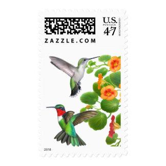 Nasturtiums and Ruby Throated Hummingbirds Postage