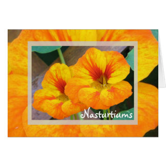 Nasturtiums Card