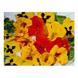 Nasturtiums  flowers postcard