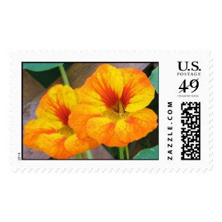Nasturtiums Stamp