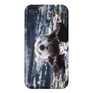 Natación de la nutria de mar iPhone 4 fundas
