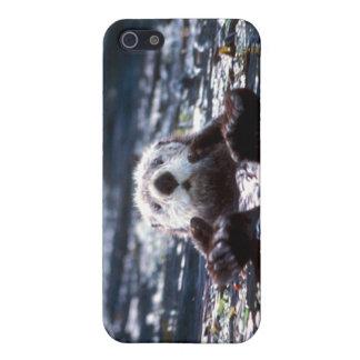 Natación de la nutria de mar iPhone 5 cárcasa