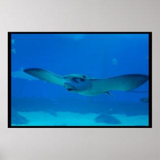Natación de la pastinaca debajo del agua póster