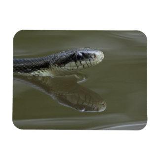 Natación de la serpiente de agua con la reflexión imanes flexibles