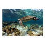 Natación de la tortuga de mar en la isla del paraí