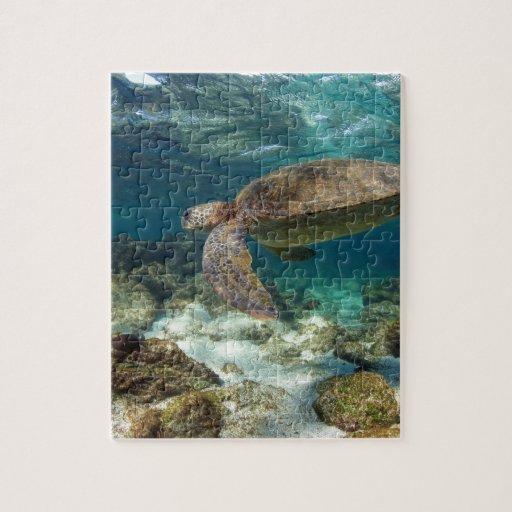 Natación de la tortuga de mar en la isla del paraí puzzle con fotos