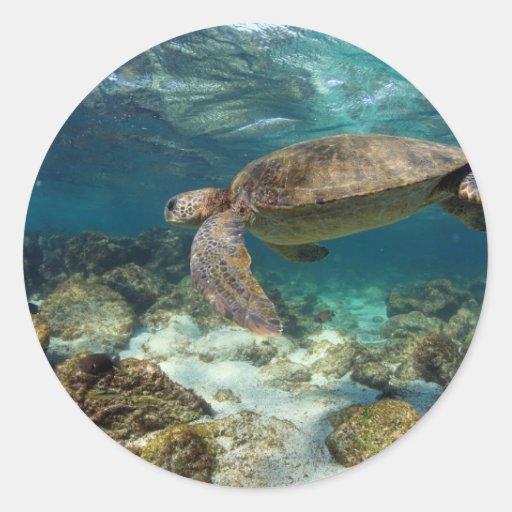 Natación de la tortuga de mar en la isla del pegatina redonda