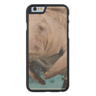 Natación de la vaca de mar funda de iPhone 6 carved® de arce