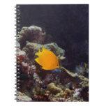 Natación del angelfish de Herald (heraldi de Centr Cuadernos