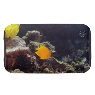 Natación del angelfish de Herald (heraldi de Centr Tough iPhone 3 Funda