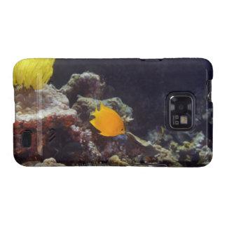 Natación del angelfish de Herald (heraldi de Centr Galaxy S2 Fundas