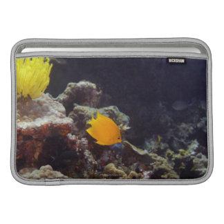 Natación del angelfish de Herald (heraldi de Centr Funda Para Macbook Air
