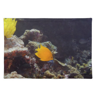 Natación del angelfish de Herald (heraldi de Centr Manteles