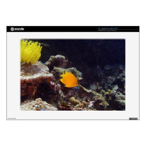 Natación del angelfish de Herald (heraldi de Centr Calcomanías Para Portátiles