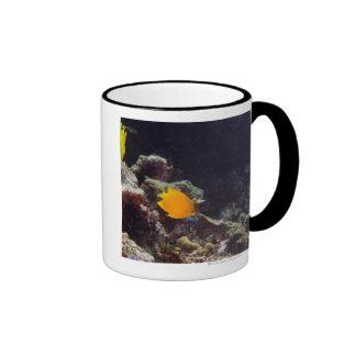 Natación del angelfish de Herald (heraldi de Centr Taza