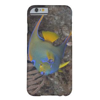 Natación del Angelfish de la reina (ciliaris de Funda De iPhone 6 Barely There