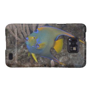 Natación del Angelfish de la reina (ciliaris de Samsung Galaxy SII Fundas