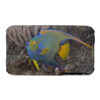 Natación del Angelfish de la reina (ciliaris de Ho iPhone 3 Fundas