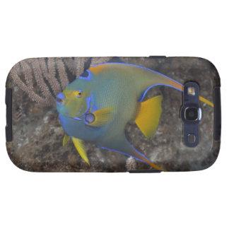 Natación del Angelfish de la reina (ciliaris de Ho Galaxy SIII Carcasa