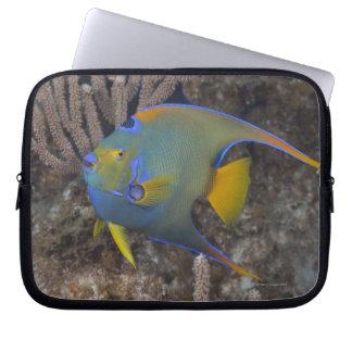 Natación del Angelfish de la reina (ciliaris de Ho Funda Ordendadores