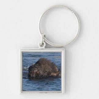 natación del bisonte llavero personalizado