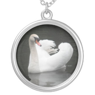 Natación del cisne del collar