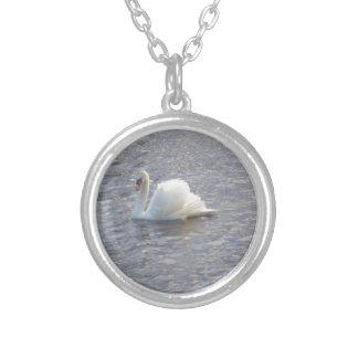Natación del cisne mudo en el lago colgante
