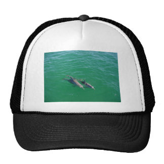 Natación del delfín de la madre con sus dos descen gorra