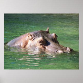 Natación del Hippopotamus en la superficie Poster