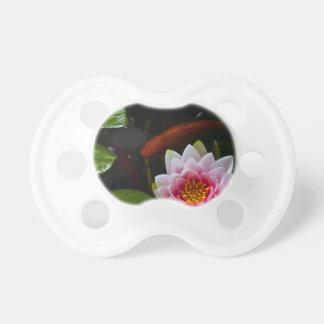 natación del koi alrededor del loto chupete