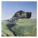 Natación del perro en agua azulejo cuadrado grande