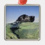 Natación del perro en agua adorno cuadrado plateado