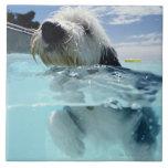 Natación del perro en una piscina azulejo cuadrado grande