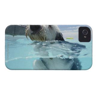 Natación del perro en una piscina carcasa para iPhone 4