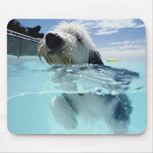 Natación del perro en una piscina tapetes de raton