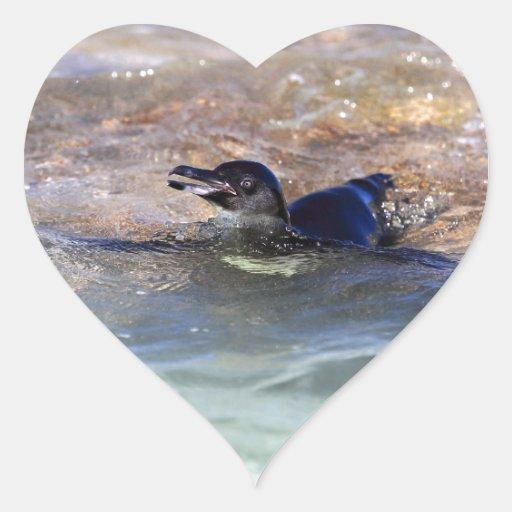 Natación del pingüino de las Islas Galápagos en el Colcomanias Corazon Personalizadas