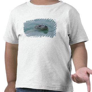 Natación del sello de puerto en el lago glacial camiseta