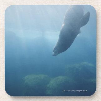 Natación del sello debajo del agua posavaso